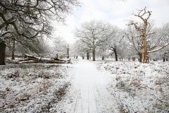 Winterlandschaft des Richmond-Parks Lizenzfreie Stockfotos