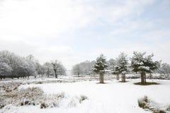 Winterlandschaft des Richmond-Parks Lizenzfreies Stockfoto
