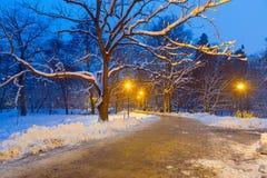 Winterlandschaft des schneebedeckten Parks in Gdansk Lizenzfreie Stockfotos