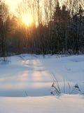 Winterlandschaft des Schnees beleuchtete durch den Sonnenuntergang, der durch Bäume eindringt Stockfoto