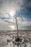 Winterlandschaft, die das Meer übersieht Nach Eisregen kam die Sonne heraus Der Baum im Eis gegen den Himmel Lizenzfreies Stockfoto