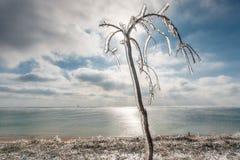 Winterlandschaft, die das Meer übersieht Nach Eisregen kam die Sonne heraus Der Baum im Eis gegen den Himmel Stockbilder