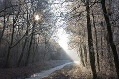 Winterlandschaft in einem gefrorenen Wald Stockfotos