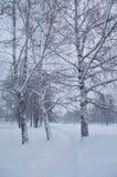 Winterlandschaft in einem Park Stockfotos