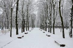 Winterlandschaft in einem schneebedeckten Park nach schwere nasse Schneefälle Eine starke Schneeschicht liegt auf den Niederlassu lizenzfreies stockbild