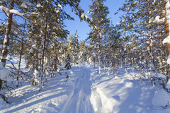 Winterlandschaft an einem sonnigen Tag Lizenzfreie Stockfotos