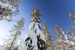 Winterlandschaft an einem sonnigen Tag Lizenzfreie Stockbilder