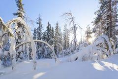 Winterlandschaft an einem sonnigen Tag Lizenzfreie Stockfotografie