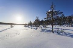 Winterlandschaft an einem sonnigen Tag Stockbilder