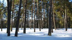 Winterlandschaft in einem Wald Stockbilder