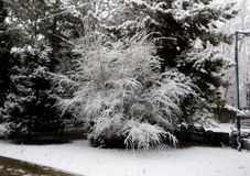 Winterlandschaft - eisige Bäume im schneebedeckten Wald Lizenzfreies Stockfoto