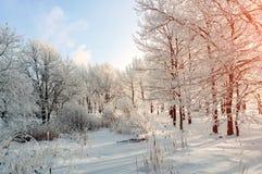 Winterlandschaft - eisige Bäume im Winterwald am sonnigen Morgen Winterlandschaft mit Winterbäumen Stockfotografie