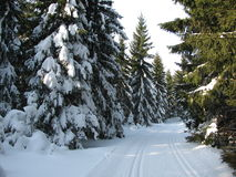 Winterlandschaft entlang den Bahnen für Skilanglauf stockbild