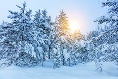 Winterlandschaft - gefrorene Bäume im Wald Stockbilder
