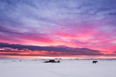 Winterlandschaft, Gruppe Pferde auf Schneefeld in der Landschaft an der Dämmerung vor Sonnenuntergang in Island Lizenzfreies Stockbild