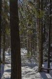 Winterlandschaft hinter Baumstämmen lizenzfreies stockbild
