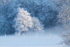 Winterlandschaft im Nebel Lizenzfreies Stockfoto