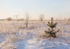 Winterlandschaft im Schnee Lizenzfreies Stockbild