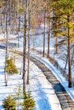 Winterlandschaft im Sonnenlicht, Weg für Wege im Park zwischen den Bäumen der Kiefer und schießend Lärche, von einer Höhe, Lizenzfreies Stockfoto