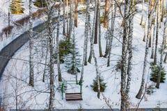Winterlandschaft im Sonnenlicht, Weg für Wege im Park zwischen den Bäumen der Kiefer und schießend Lärche, von einer Höhe, Lizenzfreie Stockbilder