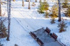 Winterlandschaft im Sonnenlicht, Weg für Wege im Park zwischen den Bäumen der Kiefer und schießend Lärche, von einer Höhe, Lizenzfreie Stockfotografie