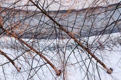 Winterlandschaft im Sonnenlicht, Weg für Wege im Park zwischen den Bäumen der Kiefer und schießend Lärche, von einer Höhe, Stockfotografie