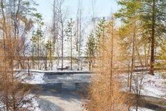 Winterlandschaft im Sonnenlicht, Weg für Wege im Park zwischen den Bäumen der Kiefer und schießend Lärche, von einer Höhe, Lizenzfreies Stockbild