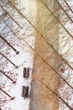 Winterlandschaft im Sonnenlicht, Weg für Wege im Park zwischen den Bäumen der Kiefer und schießend Lärche, von einer Höhe, Stockbild
