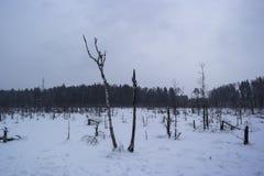 Winterlandschaft im Wald Lizenzfreie Stockbilder