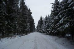 Winterlandschaft im Wald Lizenzfreies Stockbild