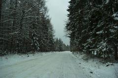 Winterlandschaft im Wald Lizenzfreie Stockfotos