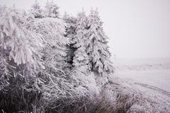 Winterlandschaft im Wald mit den Bäumen bedeckt mit Weiß lizenzfreie stockbilder