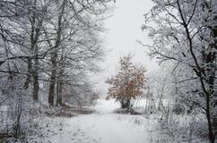 Winterlandschaft im Wald mit Schnee und buntem Baum Stockbild