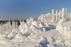 Winterlandschaft in Lappland Stockfotos