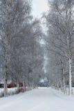 Winterlandschaft mit Allee von Bäumen, Norwegen Lizenzfreie Stockfotos
