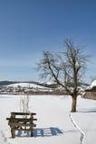 Winterlandschaft mit alleinem Baum Lizenzfreies Stockfoto