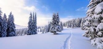 Winterlandschaft mit angemessenen Bäumen unter dem Schnee Landschaft für die Touristen glückliches Mädchen mit Reisenfall lizenzfreie stockfotos