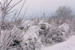 Winterlandschaft mit Bäumen Lizenzfreies Stockfoto