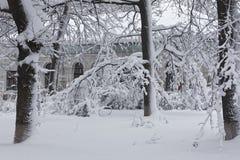 Winterlandschaft mit Bäumen Stockbild