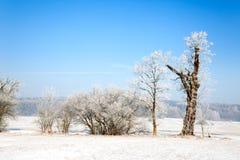 Winterlandschaft mit Bäumen Royalty Free Stock Photos