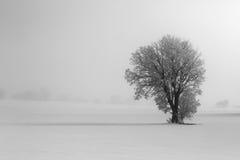 Winterlandschaft mit Baum auf einem Schnee Lizenzfreie Stockbilder