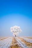 Winterlandschaft mit bereiften Bäumen stockfotos