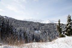Winterlandschaft mit Bergen und Wald Stockbilder
