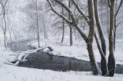 Winterlandschaft mit Blizzard im Wald Stockbilder