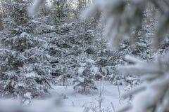 Winterlandschaft mit dem Baum bedeckt mit Schnee, Winterphotographie Lizenzfreies Stockbild