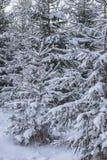 Winterlandschaft mit dem Baum bedeckt mit Schnee, Winterphotographie Stockbilder