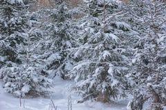Winterlandschaft mit dem Baum bedeckt mit Schnee, Winterphotographie Stockfotografie