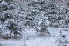 Winterlandschaft mit dem Baum bedeckt mit Schnee, Winterphotographie Lizenzfreie Stockfotografie
