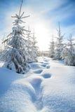 Winterlandschaft mit dem Wald und dem blauen Himmel Lizenzfreie Stockfotografie