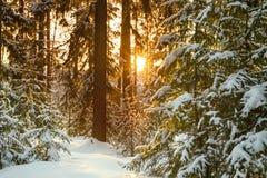 Winterlandschaft mit dem Wald und dem Sonnenuntergang Stockbilder